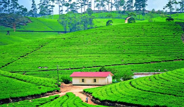 Шри-–-Ланка-погода-по-месяцам-и