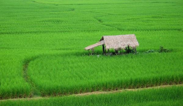 Шри-Ланка-или-Тайланд