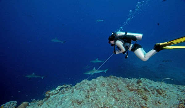 Акулы на Шри-Ланке - Вся правда