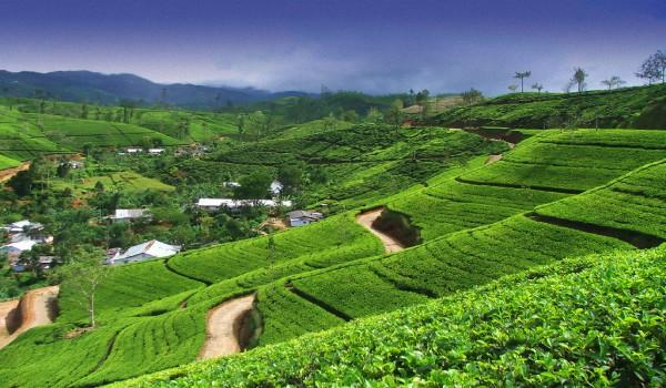 Сколько стоит отдых на Шри-Ланке