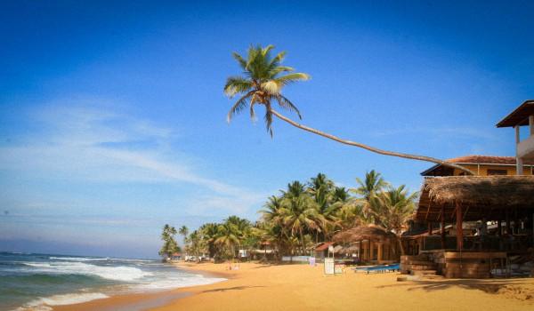 Шри-Ланка или Гоа