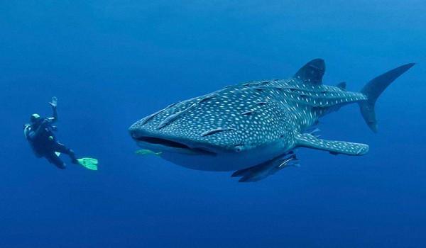 Акулы в Доминикане - Вся правда