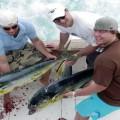 Рыбалка в Доминикане – Все Нюансы